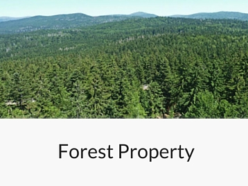 Services - Forest Property
