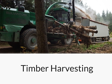 Services - Timber Harvesting
