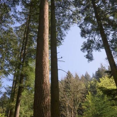Sustainable_Forestry_Hiram