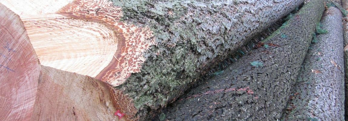 douglas-fir-timber