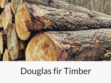 douglas-fir-timber raw
