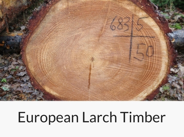 european-larch-timber raw