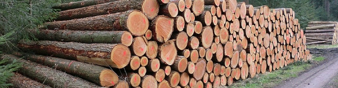 Timber for Construction Purposes