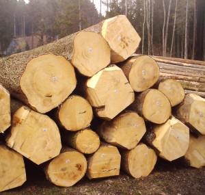 Spruce_Hiram